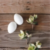 DIY蛋壳种植盆栽